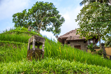view of countryside in bali, near ubud