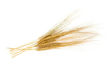 barley ears isolated on white
