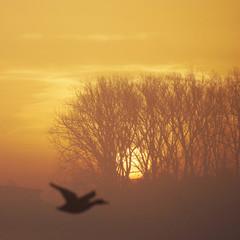 Sonnenaufgang mit Geisterflieger