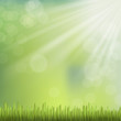 close-up look at natural grass background