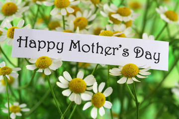 Happy Mother's Day with chamomile flowers
