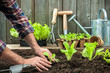 Farmer planting young seedlings - 74386972