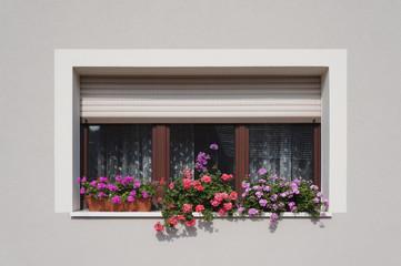 Modernisiertes Fenster mit Blumenschmuck in hellgrauer Fassade