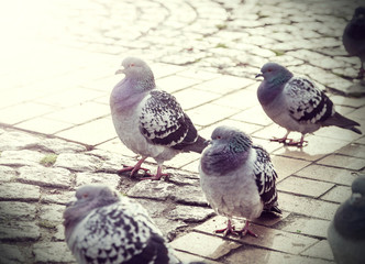 Retro filtered picture of pigeons in a city.
