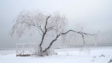 Lonely tree in ice on the winter