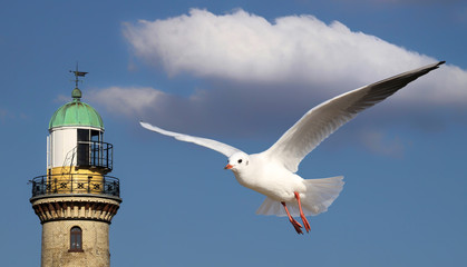 Seagull in front of lighttower