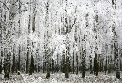 Panel Szklany Winter birch trees