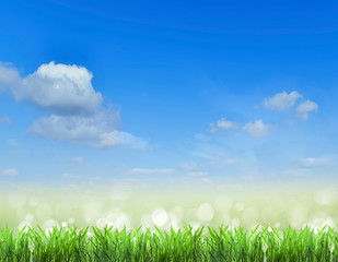 field.Grass and sky.  background