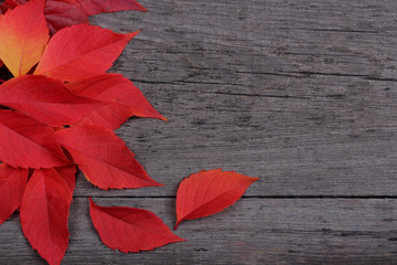 Red leaves on old wooden background