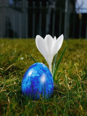 blue egg on meadow with crocusses