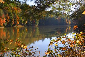 Watoga Lake In Autumn