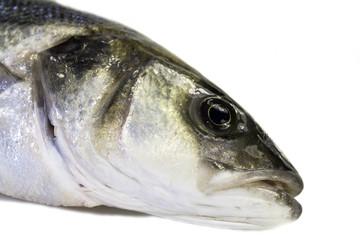Freshly caught Sea Bass