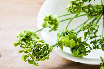 Common hogweed edible