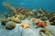 Leinwanddruck Bild - Cushion sea star underwater with coral and sponge