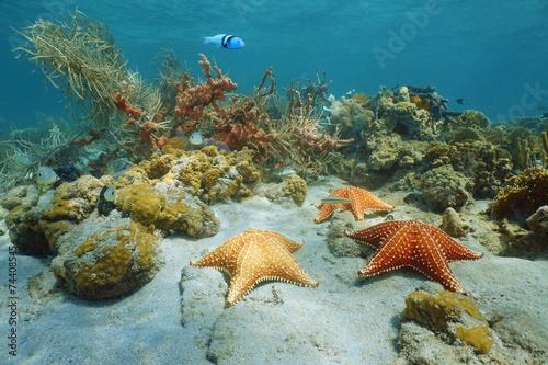 Leinwanddruck Bild Cushion sea star underwater with coral and sponge