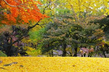 イチョウ舞う 晩秋の奈良公園