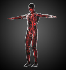 3d render medical illustration of the lymphatic system