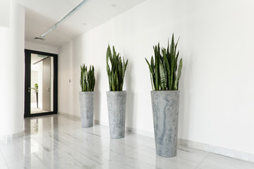 Beauty plants on corridor