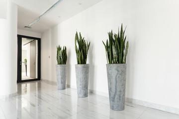 Beauty plants on corridor