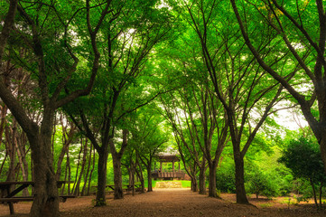 A small community park in south korea during summer season.