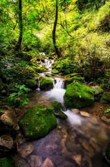 A small creek in a mossy forest. Taken in Wanju, South Korea