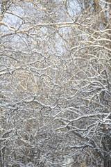 Winter Bransches full frame