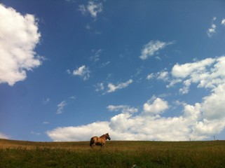 horse with the sky