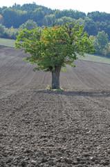 arbre solitaire