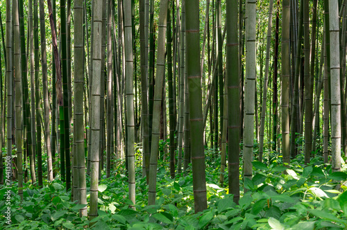 Aluminium Bamboe Bamboo forest in Damyang, South Korea taken during summer.