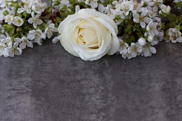 Rose mit Kirschblüten