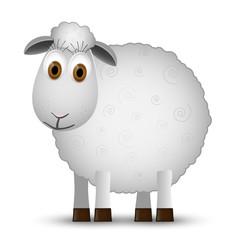 Sheep isolated on white background.