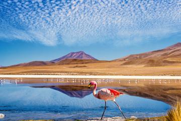 Lagoon flamingo bolivia © mezzotint_fotolia
