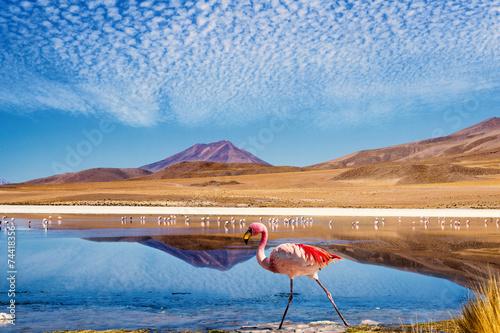 Foto op Plexiglas Flamingo Lagoon flamingo bolivia