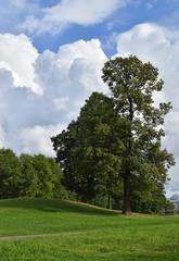 Парковый пейзаж с облаками