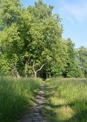 Тропинка в парке Павловска