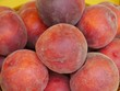 Nectarines in the summer