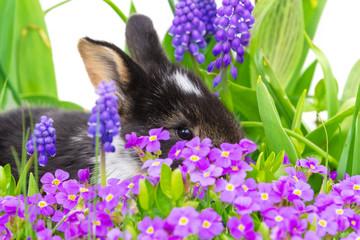 Osterhäschen versteckt sich in Blumen