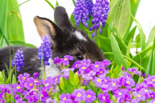 canvas print picture Osterhäschen versteckt sich in Blumen