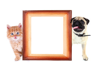 Funny pug dog and little red kitten with frame isolated on