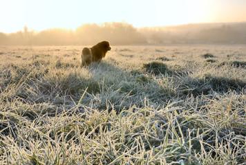 chien dans un champ en hiver