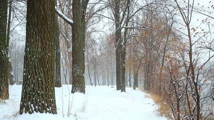 snow in the wood