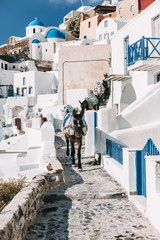 Donkeys on the street of Oia, Santorini, Greece.
