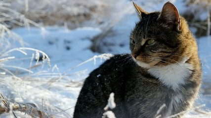 young cat in the snowy winters