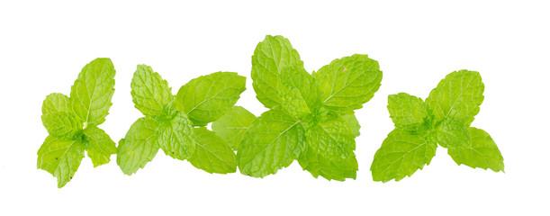 heap of fresh kitchen mint leaves