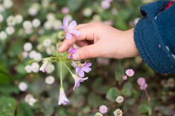 花を触る子供の手