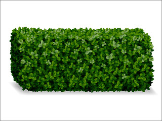 boxwood hedges ortho, decorative green fence