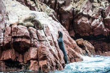 Isole Ballestas, Perù