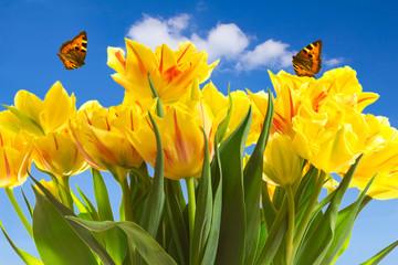 Tulips butterflies blue sky