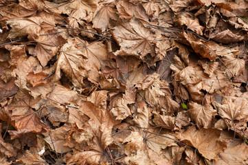 foglie a terra in autunno