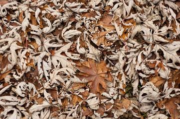foglie di ottobre